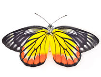 Butterfly. On a white background Stock Photography