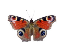Butterfly on white background Royalty Free Stock Photography