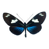 Butterfly on a white background in high definition Stock Photos