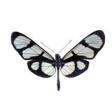 Butterfly on a white background in high definition Royalty Free Stock Images