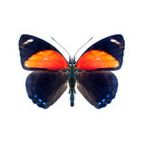 Butterfly on a white background in high definition Royalty Free Stock Photo
