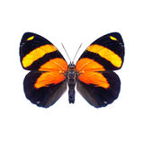 Butterfly on a white background in high definition Royalty Free Stock Photography