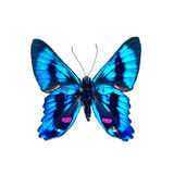 Butterfly on a white background in high definition Royalty Free Stock Photos