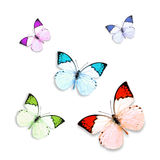 Butterfly on white background Stock Images