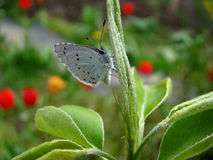 Butterfly. The butterfly is white with black spots sitting on the ground Stock Photo