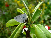 Butterfly. The butterfly is white with black spots sitting on the ground Royalty Free Stock Photos