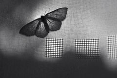 Butterfly. White butterfly on the curtain close up stock photo