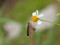 Butterfly on White Flower Royalty Free Stock Photo