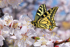 Butterfly and white flower Stock Images