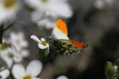 Butterfly on white flower. In the forest Stock Images