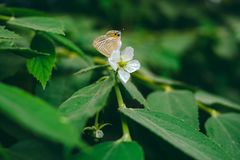 Butterfly on white flower in the nature royalty free stock photo