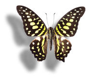 Butterfly  on white. Royalty Free Stock Image