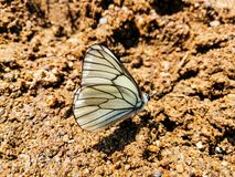 The butterfly. The. Butterfly, white, sunday, happy, fauna stock photo