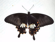 Butterfly. A wild butterfly on a book Royalty Free Stock Photography