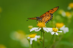 Butterfly with wild daisy flowers Stock Images