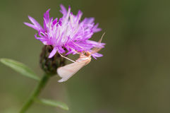 Butterfly on wild flower Royalty Free Stock Photo