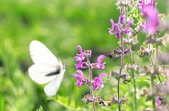Butterfly on wild flower. stock images