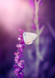 Butterfly on the wild flower Royalty Free Stock Images