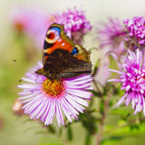 Butterfly on wild flower Stock Images