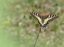 Butterfly on wild flower Stock Photography