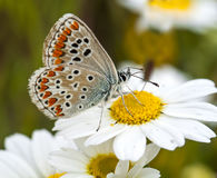 Butterfly. The Butterfly in Wild Nature Stock Photography