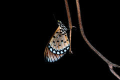 Butterfly. In the wild at night Royalty Free Stock Photos