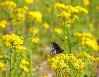 Butterfly and wildflowers Stock Image