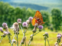 Butterfly on Wildflowers Royalty Free Stock Image
