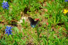 Butterfly & Wildflowers. Butterfly sitting on flower stock photos