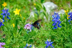 Butterfly & Wildflowers. Butterfly sitting on wildflower stock photography