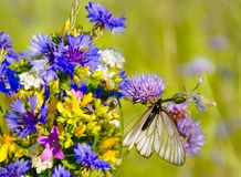 Butterfly on wildflowers Royalty Free Stock Photo