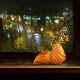 Butterfly on window with drop. In rain and autumn sheet royalty free stock photos