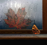 Butterfly on window with drop. In rain and autumn sheet maple stock photos