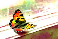 Butterfly on the window frame royalty free stock image