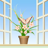 Butterfly and window plant Stock Photos