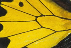 Butterfly wing. Detail macro background royalty free stock image