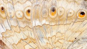 Butterfly wing. Detail macro background royalty free stock photo