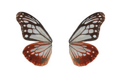 Butterfly wing stock photos