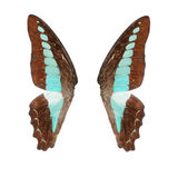 Butterfly wing Royalty Free Stock Photography