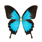 Butterfly wing Stock Image