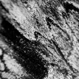 Butterfly Wing. Macro abstract of a butterfly wing in black and white Royalty Free Stock Photos