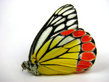 Butterfly Wing. A butterfly with colorful pattern on its wing Stock Photos