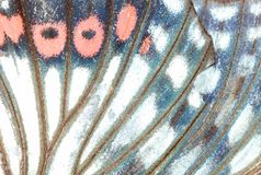 Butterfly wing background. Butterfly wing detail macro background stock photo