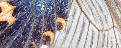 Butterfly wing background Stock Image