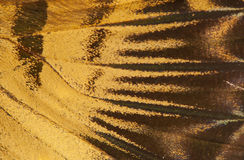 Butterfly wing background stock photography