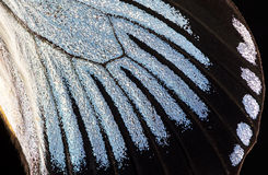 Free Butterfly Wing, Close-up Stock Photos - 84072153