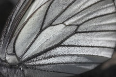 Butterfly wing close up stock photo