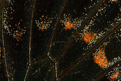 Butterfly wing close-up, background Stock Images