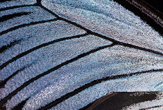 Butterfly wing, close-up Stock Photos