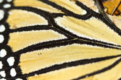 Butterfly wing closeup. Close up shot of a monarch butterfly wing Stock Photos